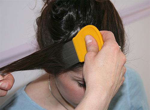 For combing lice and nits use special combs
