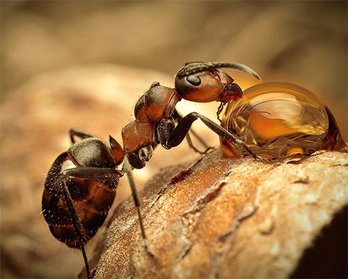 개미의 가장 흥미로운 종에 대해 자세히 알아 보겠습니다.