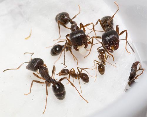 사진에서 - 개미는 거른다.