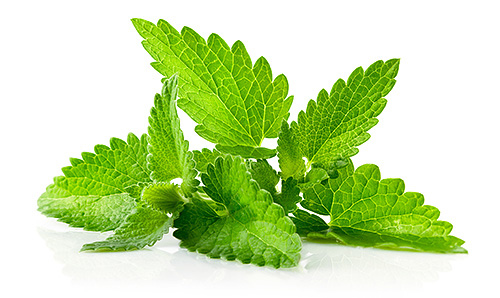 Ground mint leaves are mixed with pomegranate juice and rubbed into the head