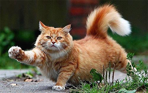 دعونا نتحدث عن كيفية إزالة البراغيث بشكل فعال وآمن من القطط