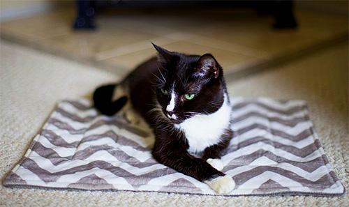في شقة ، غالباً ما تقع يرقات البراغيث في مناطق الراحة الحيوانية.