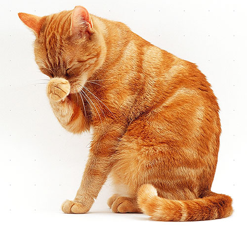 Cats and cats are more sensitive to pyrethroids than dogs, so they should be especially careful with flea products.