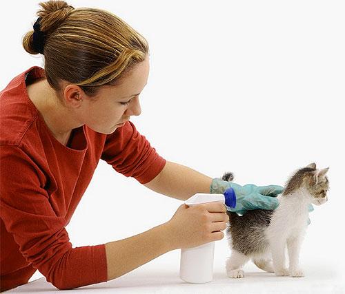 Bir pire spreyi işlerken, yavru kedinin kürkünü itmelisin ve gözlerine ve ağzına girmemeye çalışmalısın.
