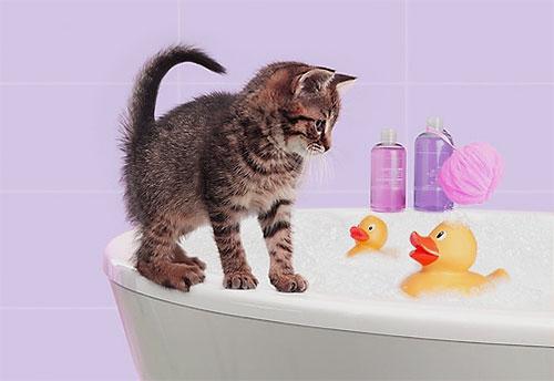 Böcek öldürücü şampuan, normal şampuan gibi köpükler ve bir yavru kedi vücuduna uygulanır.