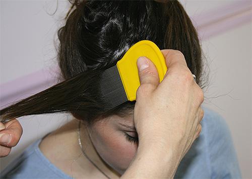 스프레이 또는 샴푸로 머리를 치료 한 후에는 특수한 빗으로 가발을 빗질해야합니다.