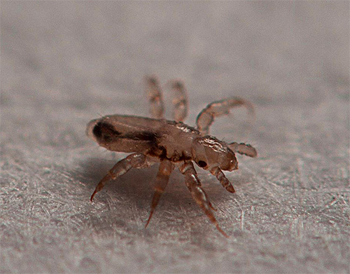 Lice larvae hatch from the remaining nits in the hair for about a week.