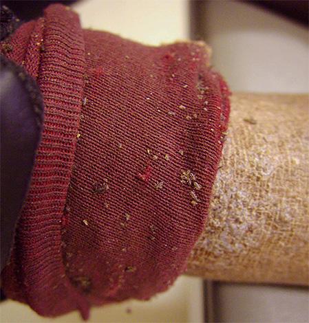 집에서 이가를 파괴하려면 몸과 옷을 항생제로 치료하면 충분합니다.