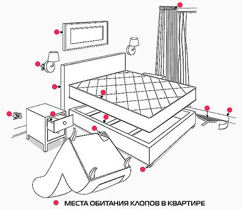 يظهر في الصورة أماكن في الشقة ، حيث أول شيء للبحث عن البق