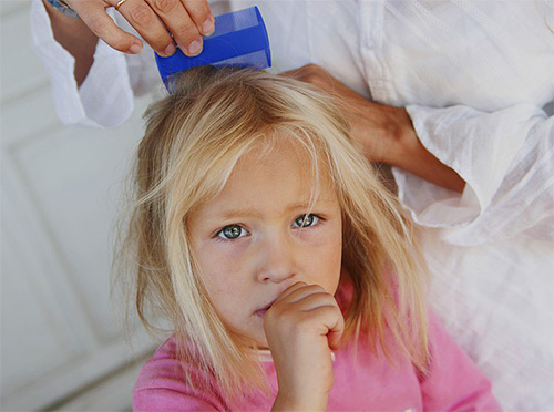 If you do not pay attention to the first symptoms of lice on time, then over time the infection threatens to turn into neglected lice.