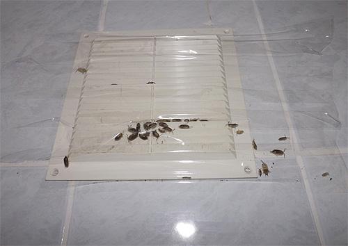 تُظهر الصورة مثالًا للتهوية المسجلة بشريط لاصق ، اخترق من خلاله الخشب إلى الشقة من العلية.