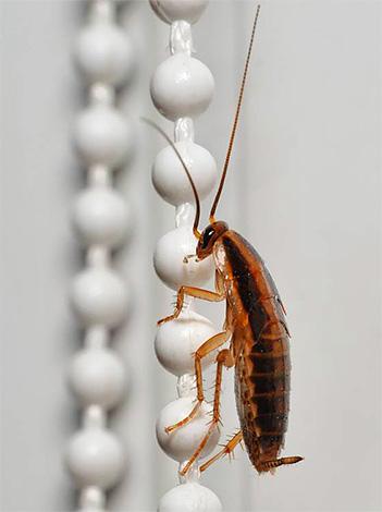 يمكن أن تدخل الصراصير الغرفة عن طريق التهوية من الجيران.