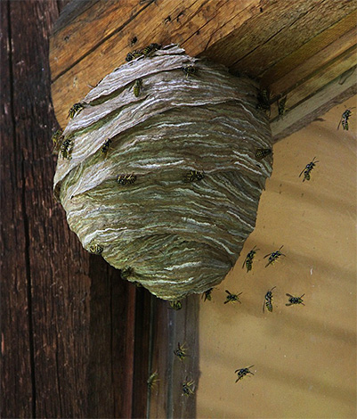إذا كان مسكن الحشرات قريبًا جدًا من منزل خشبي ، فمن المستحيل تمامًا استخدام النار.