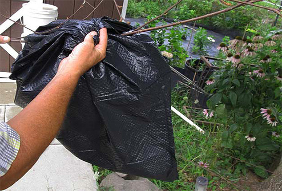 يصب المبيد في الكيس الذي يلف عش الدبابير.