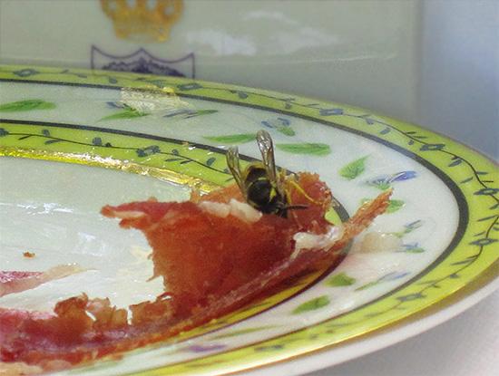 من السهل جدا جذب الدبابير لجميع أنواع الطعوم ، على سبيل المثال ، في شكل لحم مسموم.