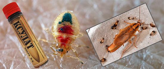 뮬라 마이크로 (Xulat Micro)가 벌래와 바퀴벌레 퇴치에 얼마나 효과적인지 알아 내려고합시다.