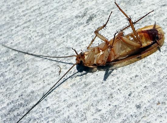 Εφέ φραγής σημαίνει ότι η Delta Zone εξασφαλίζει το θάνατο των εντόμων που προέρχονται από γείτονες.