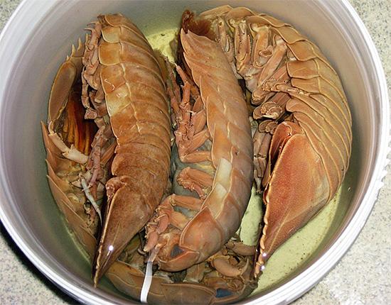هذه الحبيبات هي غذاء للبشر ، جنبا إلى جنب مع الروبيان والكركند وسرطان البحر.