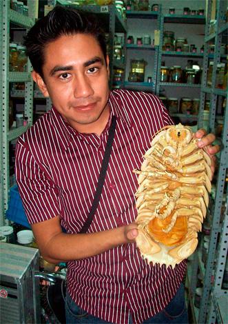 هذا هو نسخة مجففة من isopod العملاق باثينوموس giganteus (الصورة التي اتخذت في مركز البحوث).