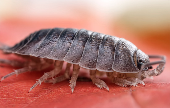 We understand where the woodlice is usually taken from in apartments and houses and why they appear here ...