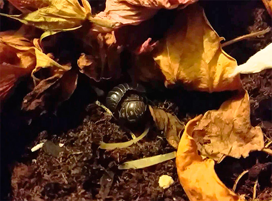Woodlice can hide, for example, in leaf litter in the front garden of a city house.