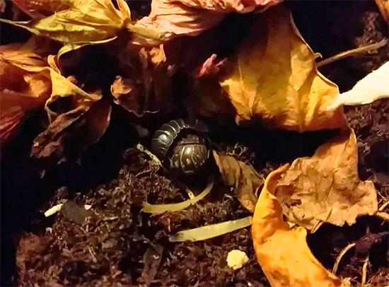 예를 들어, Woodlice는시 집 앞 정원에있는 잎 쓰레기에 숨길 수 있습니다.