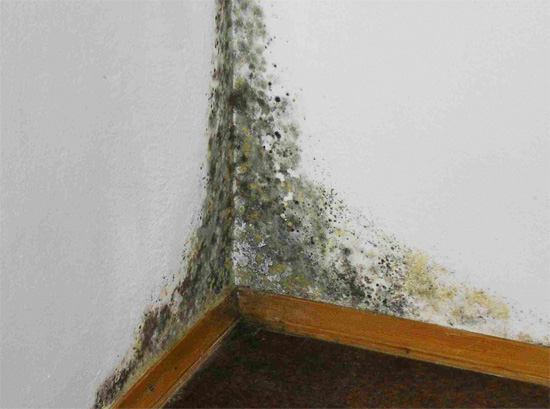 It is important to get rid of the dampness in the room as soon as possible, since this can lead to abundant development of mold.