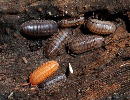 First of all, you need to keep in mind that wood lice are creatures that love moist, wet places.