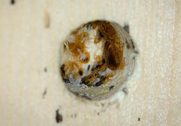 يخترق دخان الحشرات أصغر الشقوق والفتحات ، حيث يمكن أن تختبئ الحشرات أيضًا.
