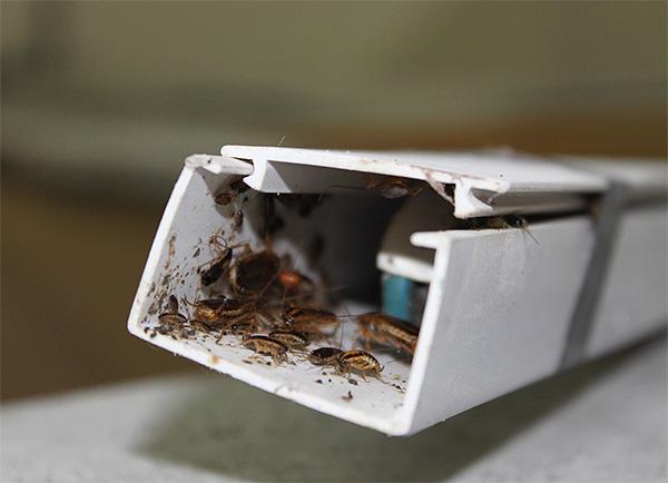 Ακόμη και σε μια τέτοια απομονωμένη περιοχή οι κατσαρίδες δεν θα επιβιώσουν ...