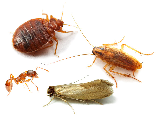 We find out how to properly fight insects in a house, apartment or country house using modern methods and insecticidal agents ...