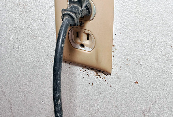 Bed bugs nests can be in electrical outlets ...