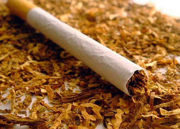 Tobacco (or rather, nicotine contained in it) is a highly effective means for the destruction of insects.