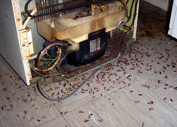 في الحالات المتقدمة ، يجب أن تقترن أقلام مبيدات الحشرات مع جل الصراصير ومستحضرات الأيروسول.