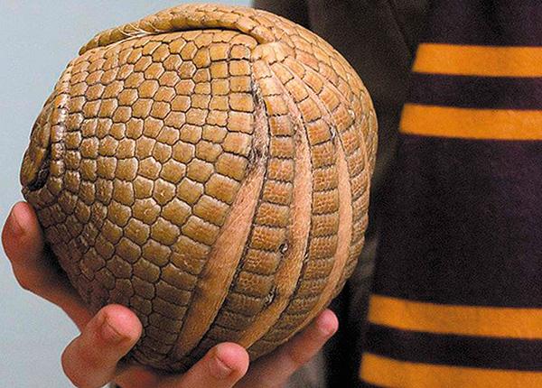 السور الحربية ، بالإضافة إلى الحطب ، في خطر يتدحرج إلى كرة.