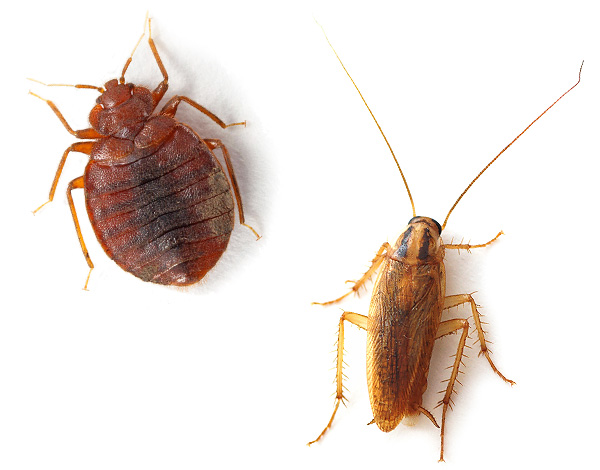 يعمل القاتل البيئي بشكل موثوق بما فيه الكفاية حتى في الحالات التي يكون فيها سكان الصراصير أو بق الفراش بقابلية مقاومة للمبيدات الحشرية القياسية.