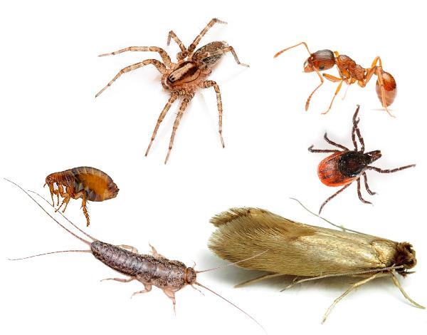 يدمر Ecokiller بفعالية ليس فقط الحشرات والصراصير ، ولكن أيضا المفصليات الأخرى ، وغالبا ما يؤذي والطفيلية في مسكن الشخص أو مؤامرة الحديقة.