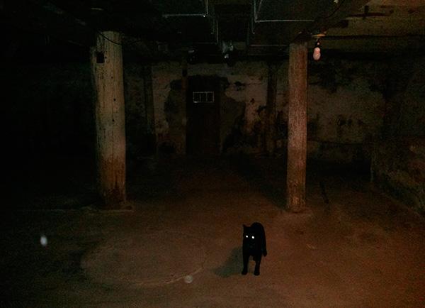 Evlerin bodrumunda, pire ile enfekte olmuş başıboş kediler ve köpekler sıklıkla yaşamaktadır.