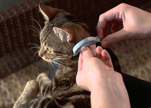 Bir kedinin veya köpeğin pire karşı profilaktik korunması için, pire tasmasının kullanılması faydalıdır.