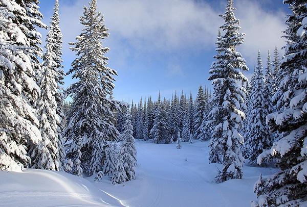 في فصل الشتاء ، تسود السبات ، وخلالها تجري العمليات الكيميائية الحيوية في أجسامهم ببطء شديد.