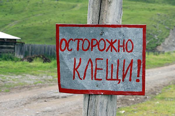 في روسيا ، يحدث ذروة نشاط القراد في أشهر الصيف.