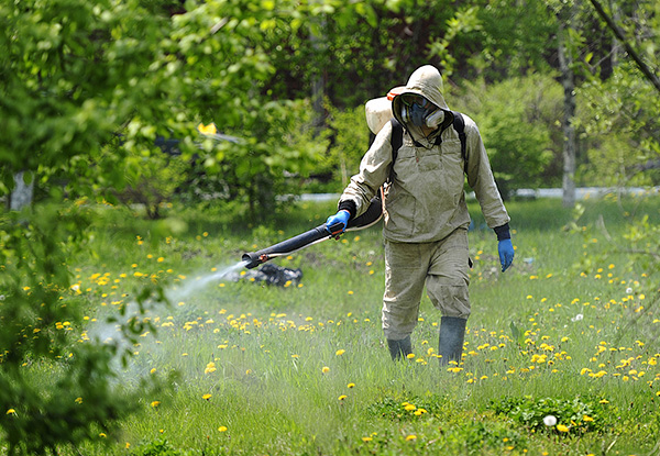 To handle a large area of ticks, it is advisable to call a special service.