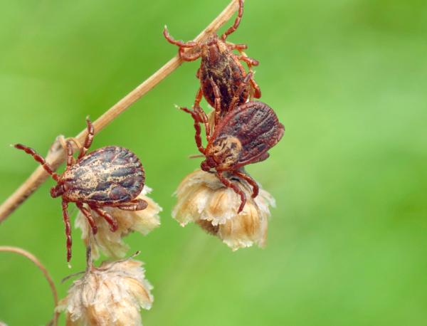 الطفيليات على الجافة bylina تحسبا للمالك.