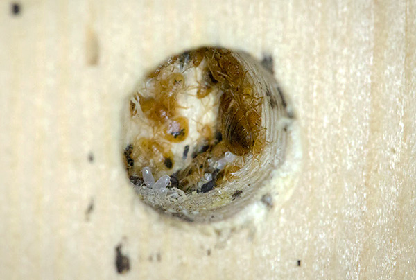 كقاعدة ، تجعل الحشرات أعشاشها قريبة من أماكن الراحة البشرية.