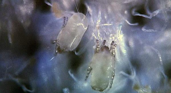 إذن هذه المخلوقات تبدو في مجهر بصري.