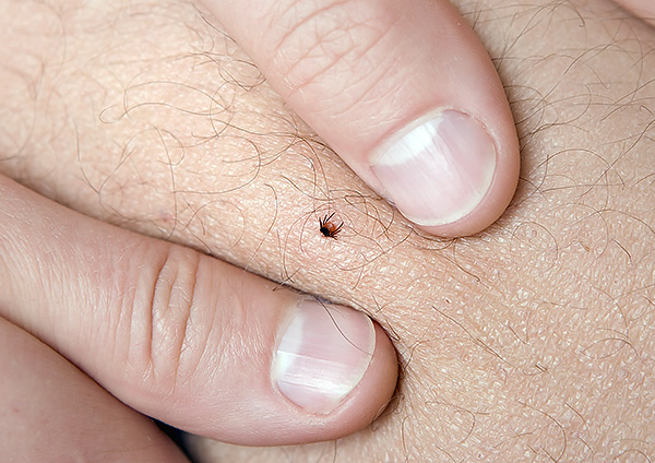 Experienced people in most cases quickly and successfully remove ticks with their fingers.