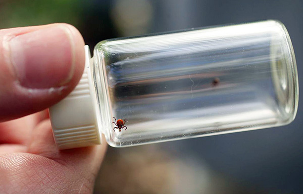 Tick analysis will reveal the presence of tick-borne encephalitis virus, as well as Lyme disease causative agents.